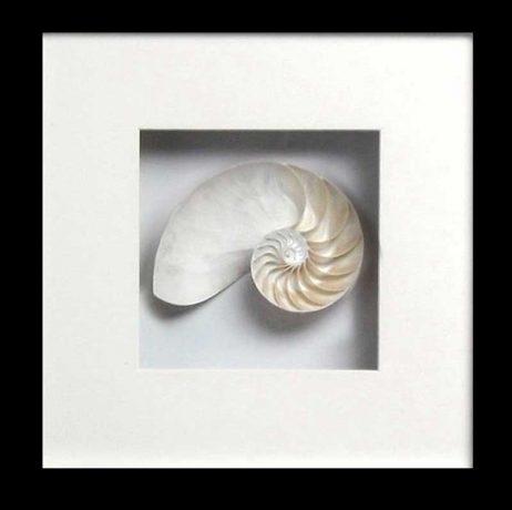 Nautilus Stripped Back (Black Frame)