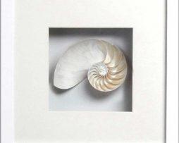 Nautilus Stripped Back (White Frame)