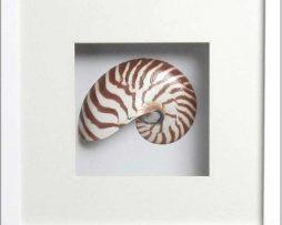 Nautilus Stripped Front (White-Frame)