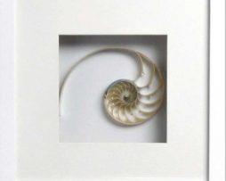 Nautilus Stripped Middle (White Frame)