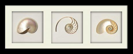 Pearl Nautilus TRICUT Black Landscape Frame