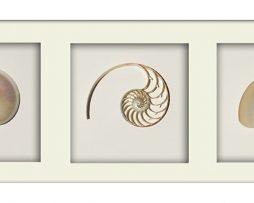 Pearl Nautilus TRICUT White Landscape Frame