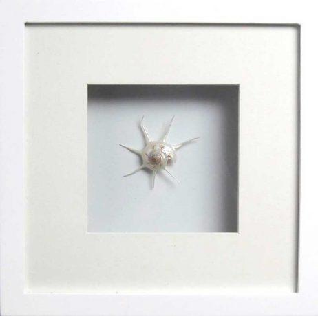 Yoka Pearl (White Frame)