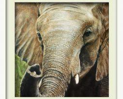 Elephant (white frame)