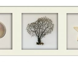 Pearl Nautilus Shell and Coral Trio - Landscape - White Frame