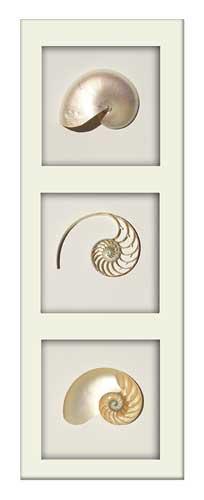 Pearl Nautilus Tricut - Portrait - White Frame
