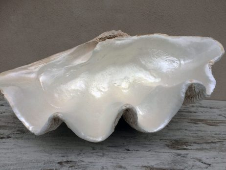 Half Clam Shell - Pearl Finish