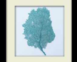 Turquoise Sea Fan - Black Frame