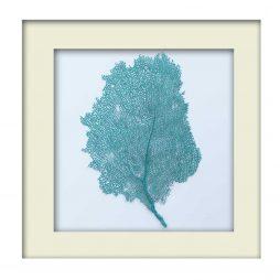 Turquoise Sea Fan - White Frame