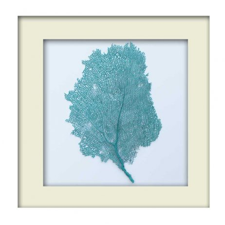 Turquoise Sea Fan - White Frame